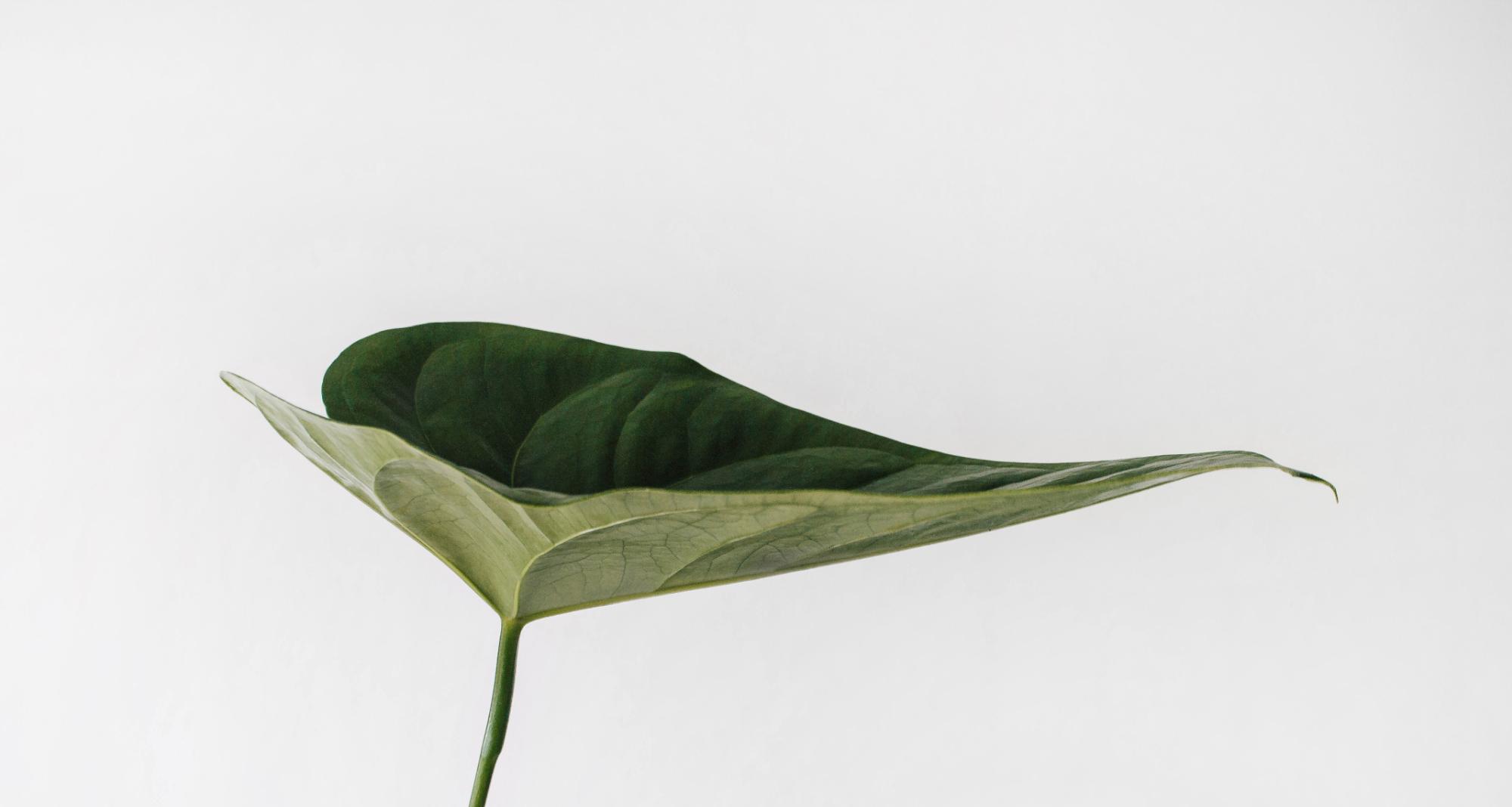 Grünes Blatt mit grauem Hintergrund